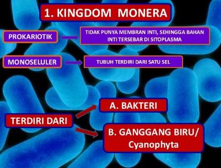 √Klasifikasi Kingdom Monera : Bentuk, Struktur , Contoh dan Cara Reproduksinya