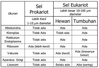 √Perbedaan Prokariota dan Eubariota (LENGKAPP)