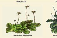 √ Ciri sifat lumut dan plantae (LENGKAP)
