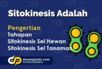 Sitokinesis Adalah